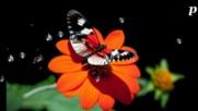 Природата рисува красота! ... ...