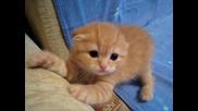 Прекрасно котенце