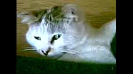 Котка се Прозява и намига