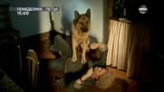"""""""Комисар Рекс"""" – сезон 11, всеки делничен ден от 15.00 ч. по DIEMA"""