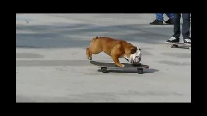 Булдог кара скейтборд