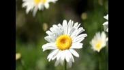 Сигнал-пролетни гласове
