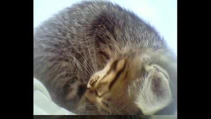 Аничка - Котка