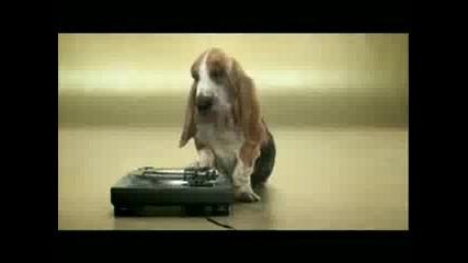 Куче Прави Beatbox