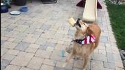 Куче се учи да лови храна