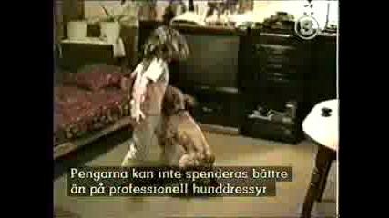 Куче Обърква Рода Си
