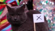 Ще ''скъсат'' ли англичаните мрежата на противника според котето ВладИмир