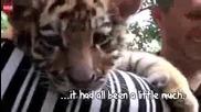 Сладки тигърчета !
