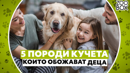 5 породи кучета, които обожават деца