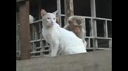 Маймунка И Котка