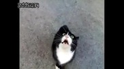 Не закачайте котето защото е изнервено !