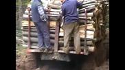 Зил 157 за дърва в гората