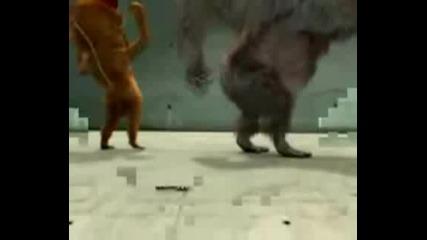 2 Maimuni Tancuvat I Ork.parlament Sviri M