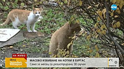 Защитници на животните алармират за масово избиване на котки в Бургас