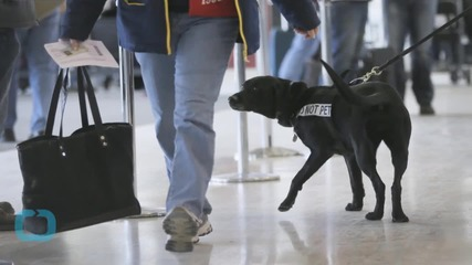 Airports Try to Stop Lone Wolf Threat