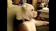 Кучето човек зяпа телевизия !