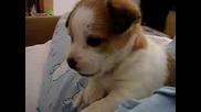 Невероятно Сладко Кученце