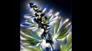 Аурата на цветята