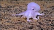 Откриха октопод - призрак