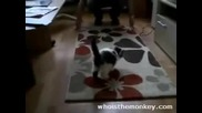Сладко Подскачащо Коте