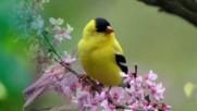 Птиците и Пролетта