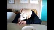 Oки, кучето с весели ръце