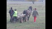коне във Враца - 01.11.2009г