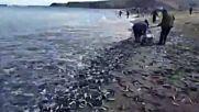 Рибата сама излезе от морето