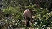 Танганайка ( Tanganyika 1954 )