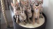 Синхронен танц на котета