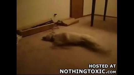 Youtube - Running Dog