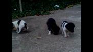 Малки кученца се хранят