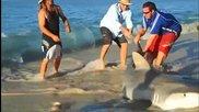 Хора спасяват 400кг Тигрова акула