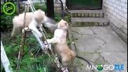 Котка прави 100 удара в секунда xd