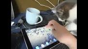 Котка vs. Ipad