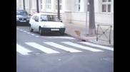 Котка на улицата