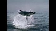 Краля На Океаните И Моретатабялата Акула