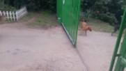 Реакцията на кучета или няма стена - няма ненавист