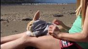 Най - кроткото зайче на света