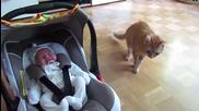 Реакцията на котка, която вижда бебе за първи път