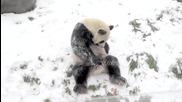 Панда се радва на снега
