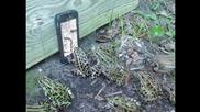 Жаби се блъскат пред телефон с червейче