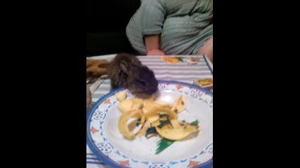 Сладко зайче яде