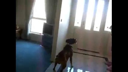 Това куче има добър отскок
