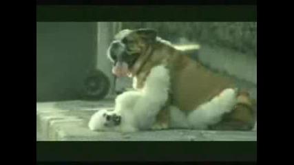Изневяра - Реклама на Bridgestone
