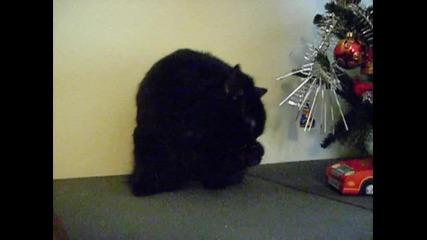 черно коте 12.12.2009 Dsci0023