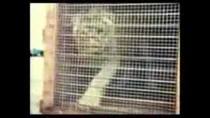 Историята на лъвчето Кристиан!