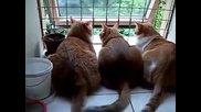 Трио котки в клюкарника