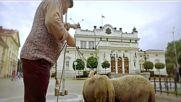 Бай Шиле и Ванко 2 - Писна ни от овце