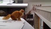 Забавни Котки в Снега 2016